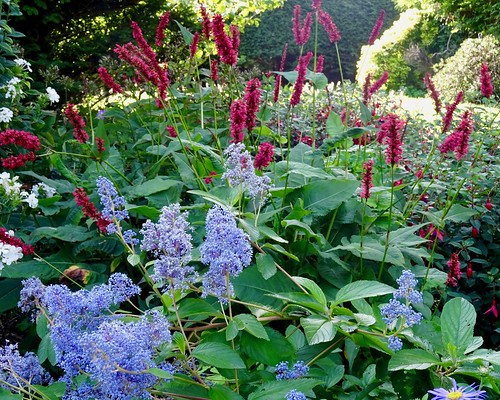 In the garden at the end of August | by Jenny Mackness