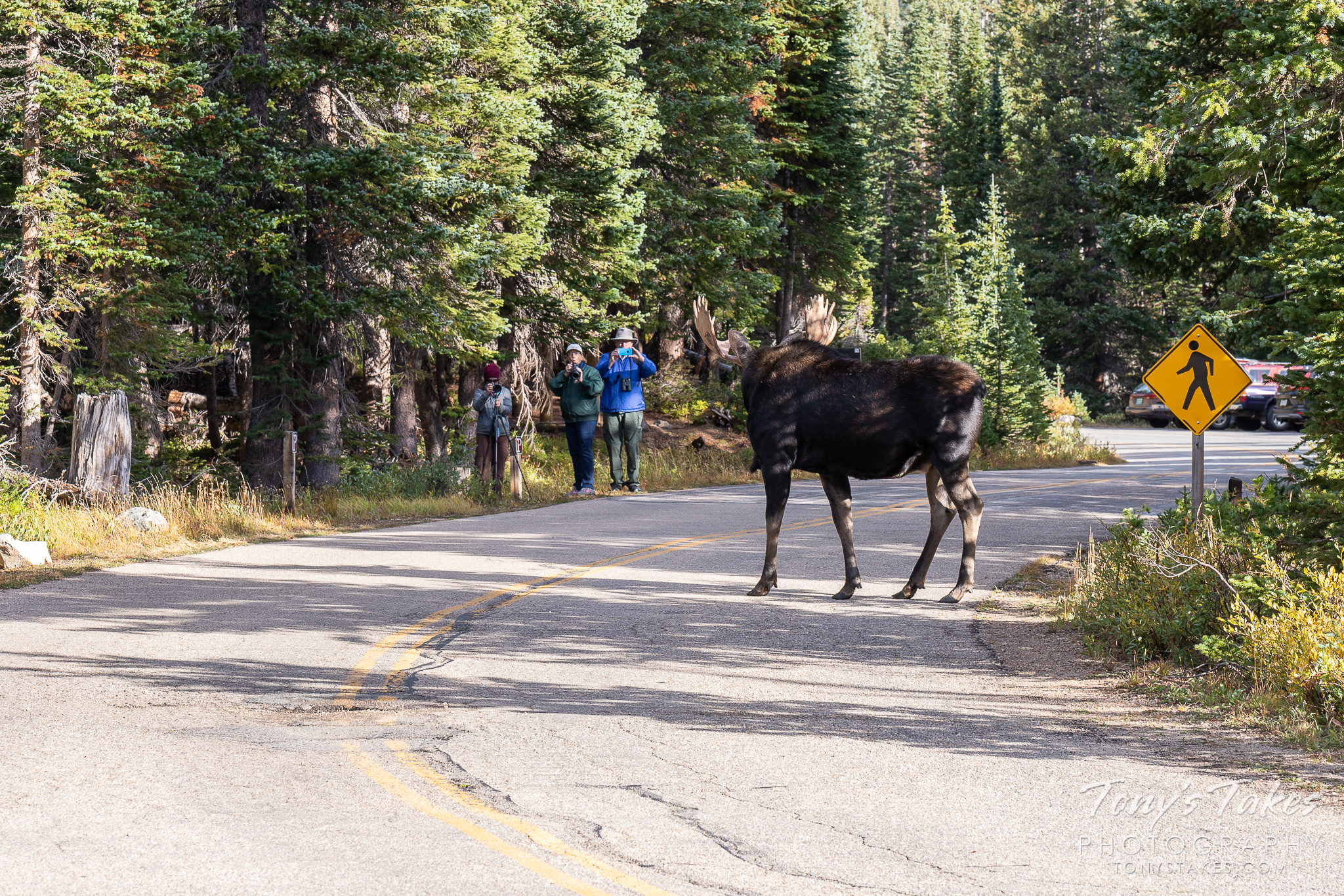 Time to change the sign to Moose crossing