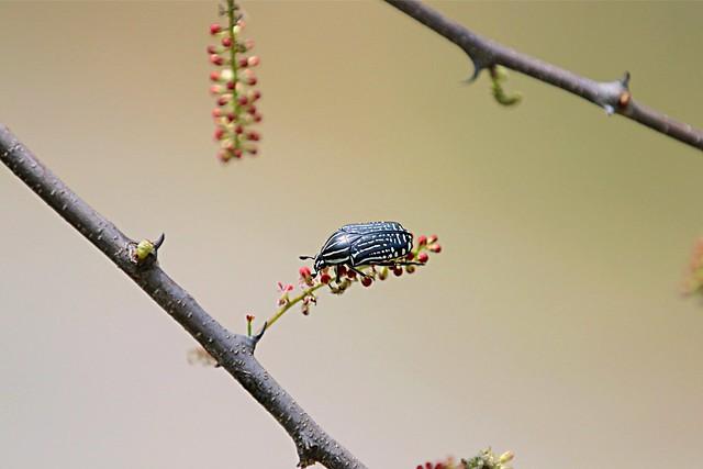 Lord Bug