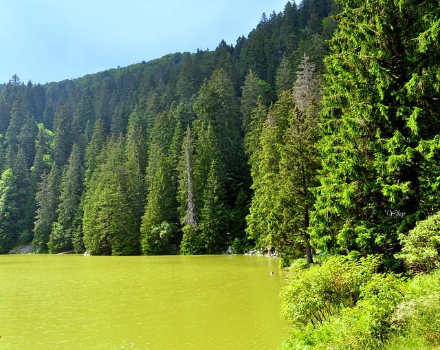 2/2  Le Lac Vert ( Haut Rhin)