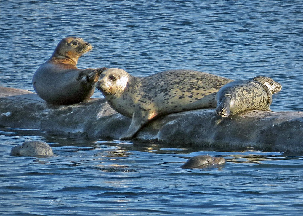 Just some seals