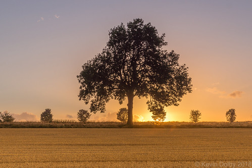 2018 august maltby sunset trees tree silhouette field summer sun sony southyorkshire sky alpha a77 england unitedkingdom gb