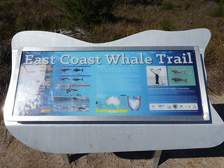 2016-09-27 Friendly Beaches Scenic Lookout 17 - East Coast Whale Trail sign