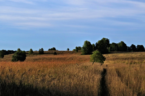 Arcadia Dunes Grassland Preserve