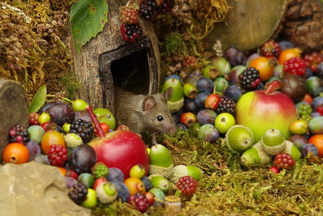 wild mouse with fruits and berry's (2)