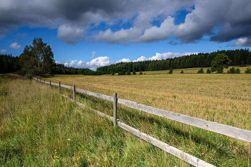 grass field sky wood forest fence tree green cloud clouds leaf ditch landscape tranbygge kungsängen upplandsbro sverige sweden scandinavien scandinavia europe nikond750 nature shadow uppland outdoor serene