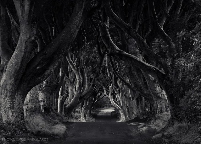 The Dark Hedges, Northern Ireland. A magical place on the Atlantic coast.