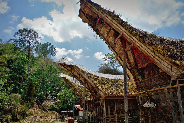 INDONESIEN, SULAWESI, Tanah Toraja , in Lemo, tongkonans, 17623/10632