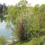 Gewässer im südlichen Abschnitt des NSG Am Ginsterpfad