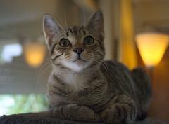 20 weeks kitten