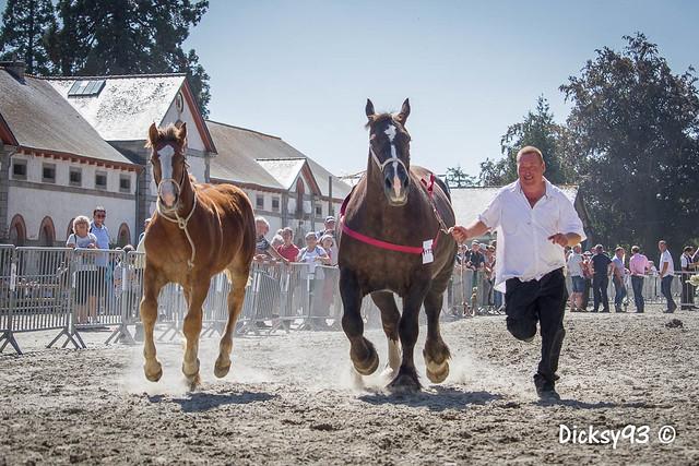 Concours départemental du cheval breton - Cavales d'automne Lamballe