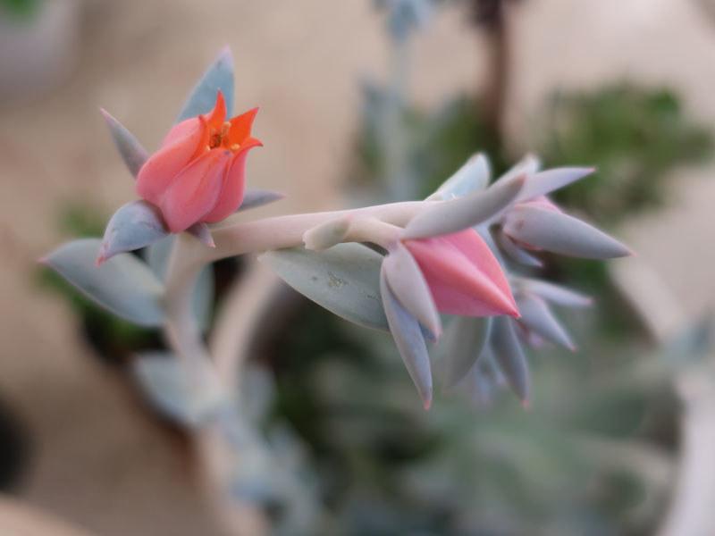 flowers on succulent