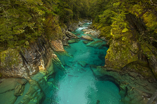 trout fish fishing pools glacial amazing blue bluepools newzealand hike hiking adventure glacier courtney paige women fun canon 2018 outdoors landscape rugged