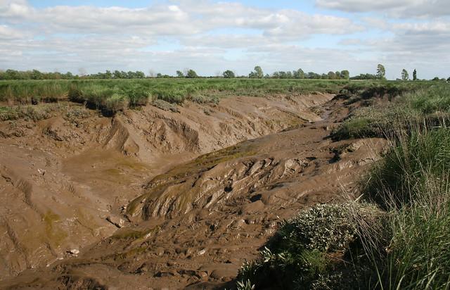 Mud glorious mud! The Babingley River