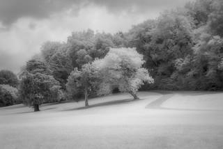 Trees at Orr Park