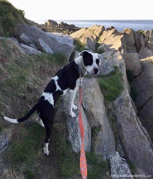 [Reunited Via Other Site] Fri, Aug 24th, 2018 Lost Female Dog - Elton Park, Dublin, Dun Laoghaire-rathdown