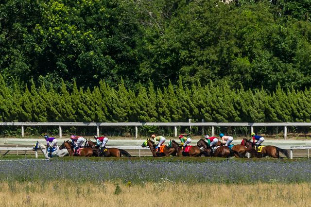 Race 6 - the backstretch