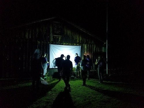 students standing around a bed sheet that is attached to a barn-like building. It's night time and the sheet is covered in insects