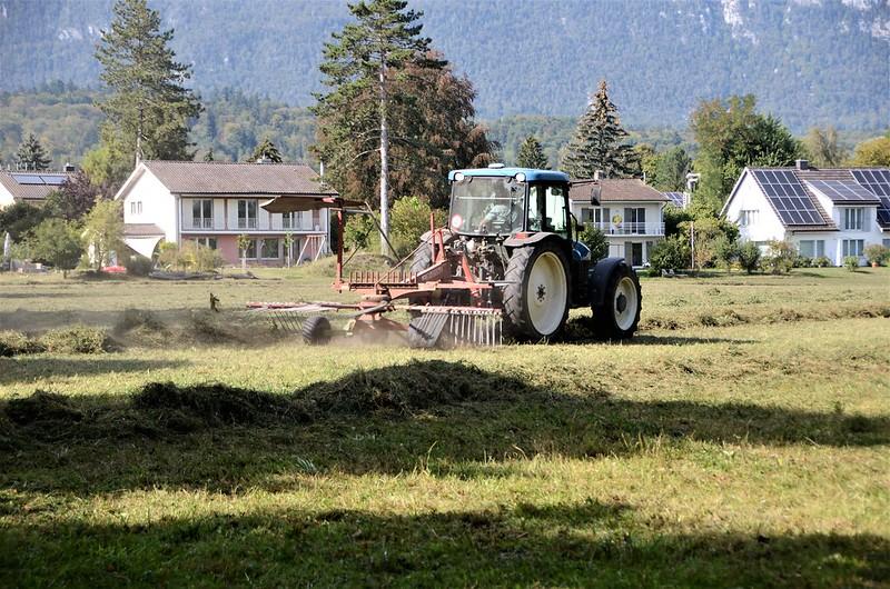 Hay harvest 10.09 (1)