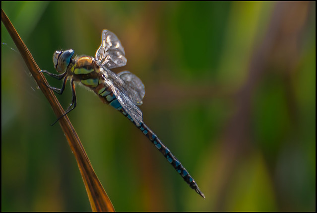 Dragonfly Waiting.