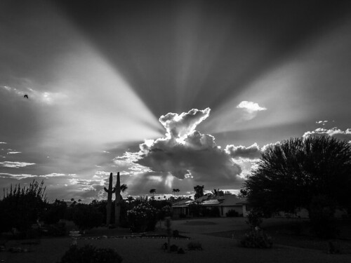 arizona sunset monsoon cloudy clouds saguaro cactus silhouette color colors nature natural orange yellow red purple outdoor sky dusk cloud city landscape blackandwhite bandw bw black white