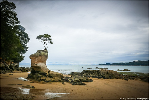 _the_tree | by l--o-o--kin thru