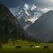 Valley of Dreams by albert dros