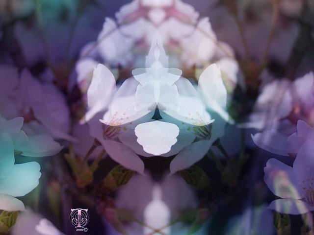 Flower Angels - EXPLORED