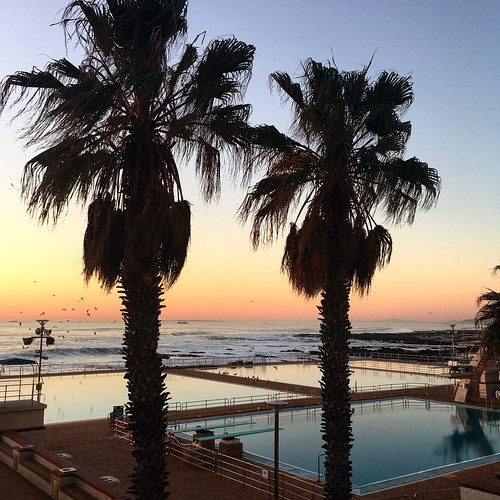 seapoint capetown westerncape southafrica iphonese iphonography iphone 2018 sunset dusk pink blue pool swimmingpool swimmingpools palmtree palmtrees tree trees