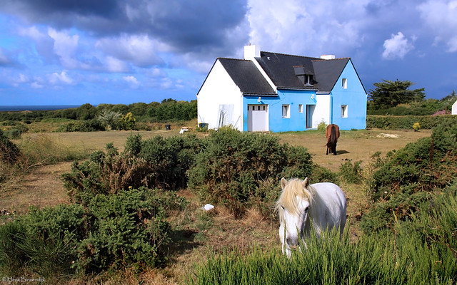 Île de Groix: Kervédan horses