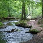 Der Oefter Bach wurde nicht begradigt und windet sich in zahreichen Kurven durch das Naturschutzgebiet