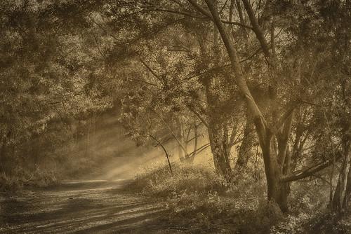 landscape oxleycreekcommon bw blackandwhite monochrome sunrays raysofsun sun morningsun fog sepia