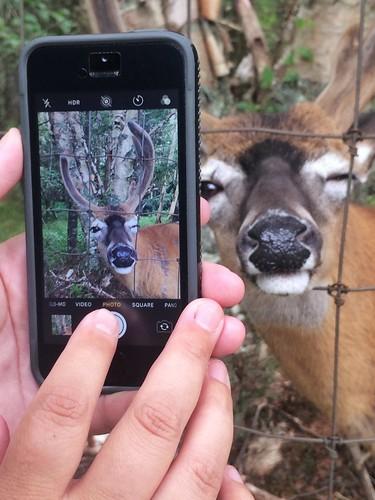 model posing outdoor canada novascotia capebreton wildlifepark tworivers animal deer