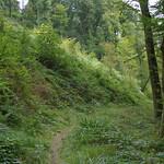 Grüner Hang im Naturschutzgebiet Oefter Tal