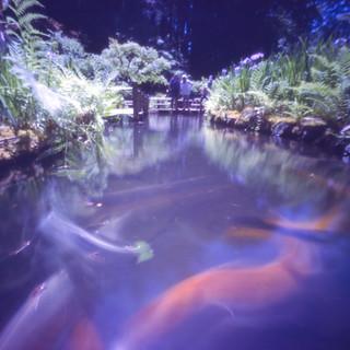 goldfish | by CraftyMoni