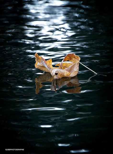 Golden Leaf on dark water