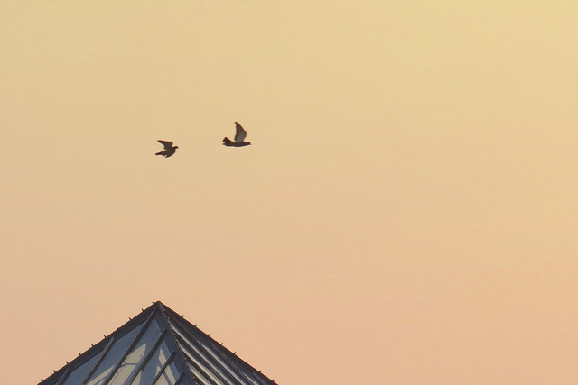 Minimalist evening sky pic with pigeons