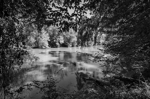 musgrove mill enoree river the south carolina woods forest outdoor landscape historical revolutionary war battle site bw black white photography monotone
