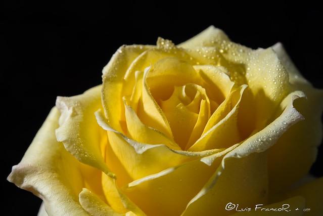 Sombras en amarillo - shadows in yellow 2