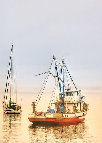 sunrise fishingboat seagull sangiovanni monterey