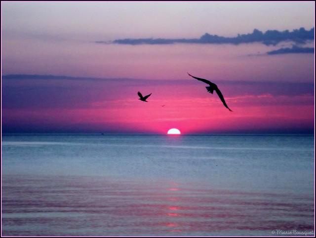 Spectacle de l'aube