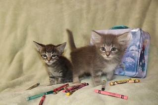 97/365/3749 (September 16, 2018) - It's Still Kitten Season! Cats and Kittens at Crafty Cat Rescue (Ann Arbor, Michigan) - Sunday September 16th , 2018 | by cseeman