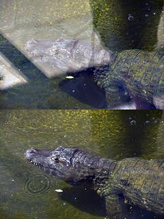 Крокодил   by Serjio2018