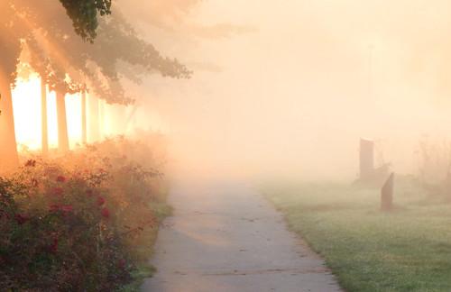 Herfst, mist 2018 (6)