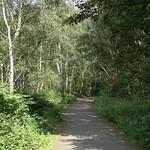 Schattiger Waldweg auf der Halde Rheinelbe