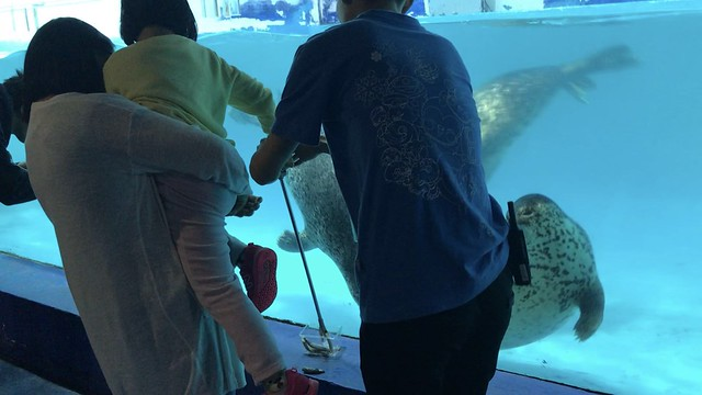 2018 CCA Investigation into Guangzhou Grandview Aquarium
