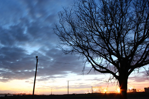 sunset tree mississippi pasagoula