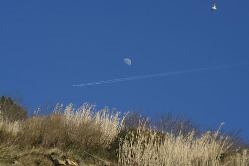 Luna con avión y gaviota | by mberasategi