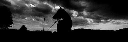 sunset sky tree rural mexico arbol atardecer cow cielo silueta 13 vaca lamarquesa