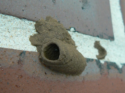 Mud dauber nest | by Keenan Pepper